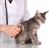 Ветеринарные клиники в Базарном Карабулаке
